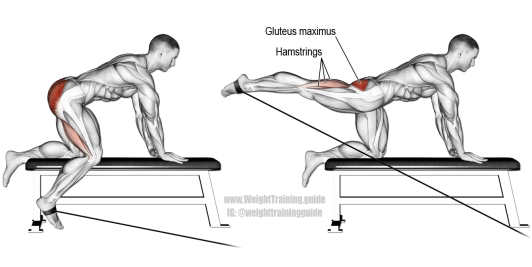 kneeling-cable-hip-extension