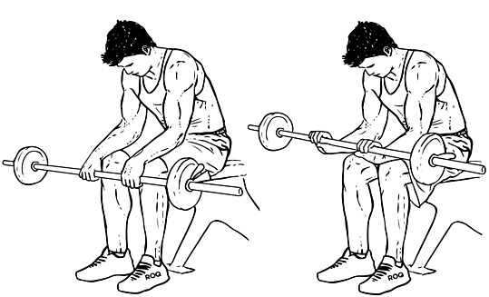 Seated_Palm-Down_Barbell_Wrist_Curl